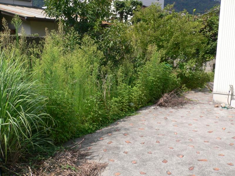 高松市 庭の草刈り 依頼を受けました