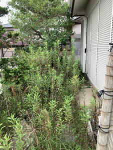 寺井町にて草抜き・木の伐採作業を行いました。